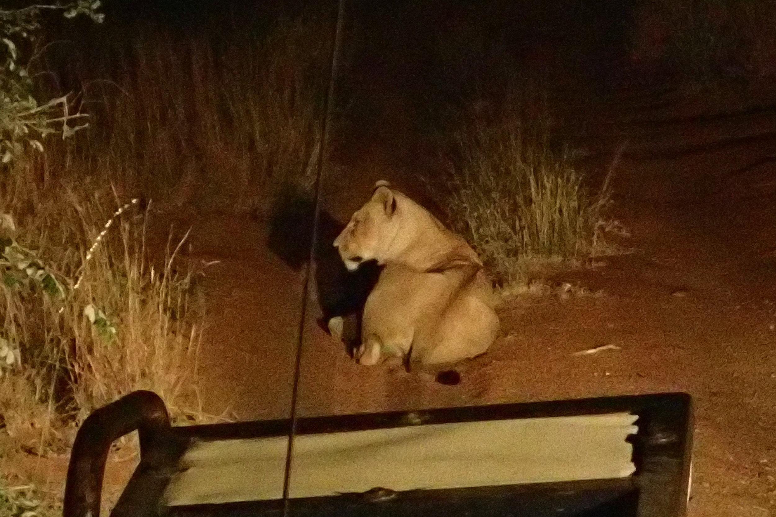 Heyyyy Nala! Where's Simba?
