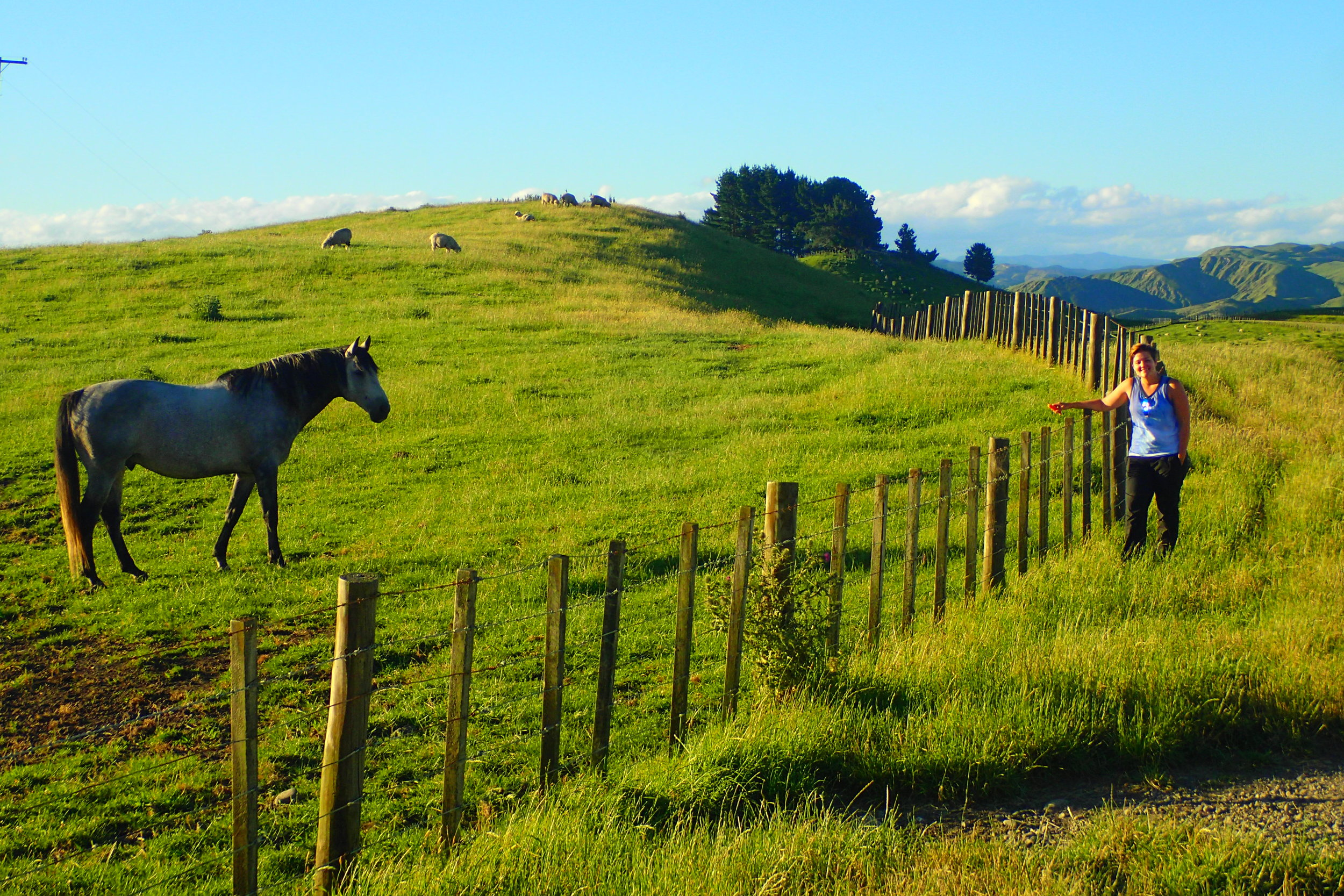 Green pastures—literally! (taken in New Zealand)