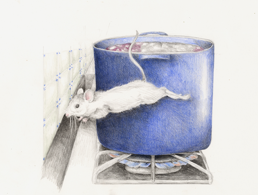 The mouse dives for cover behind the stove