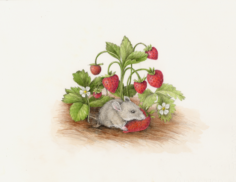 The mouse discovers sweet and juicy strawberries