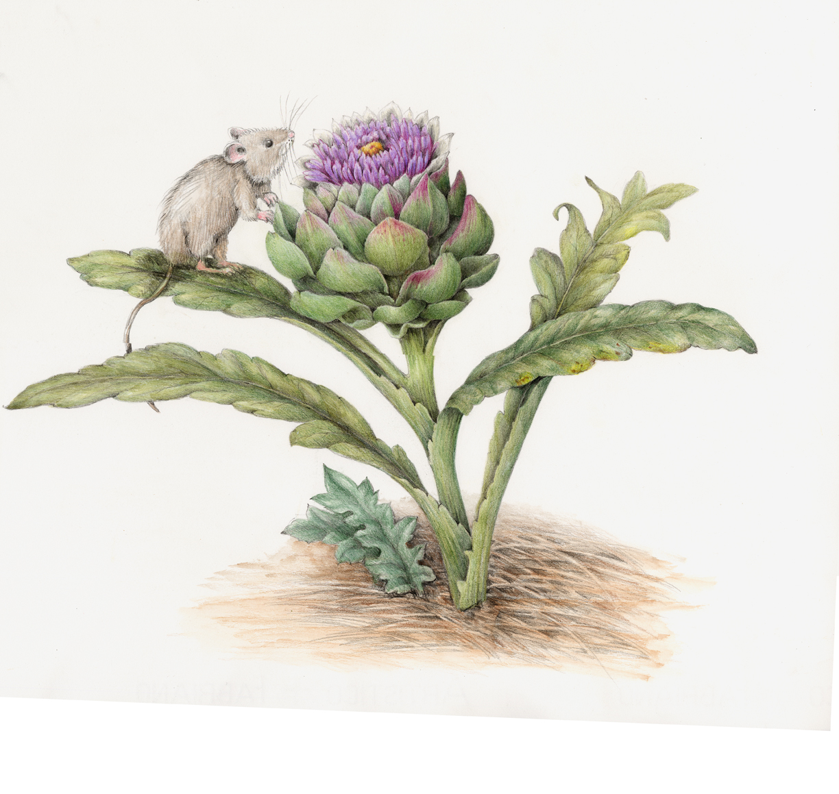 The mouse admirers an artichoke flower