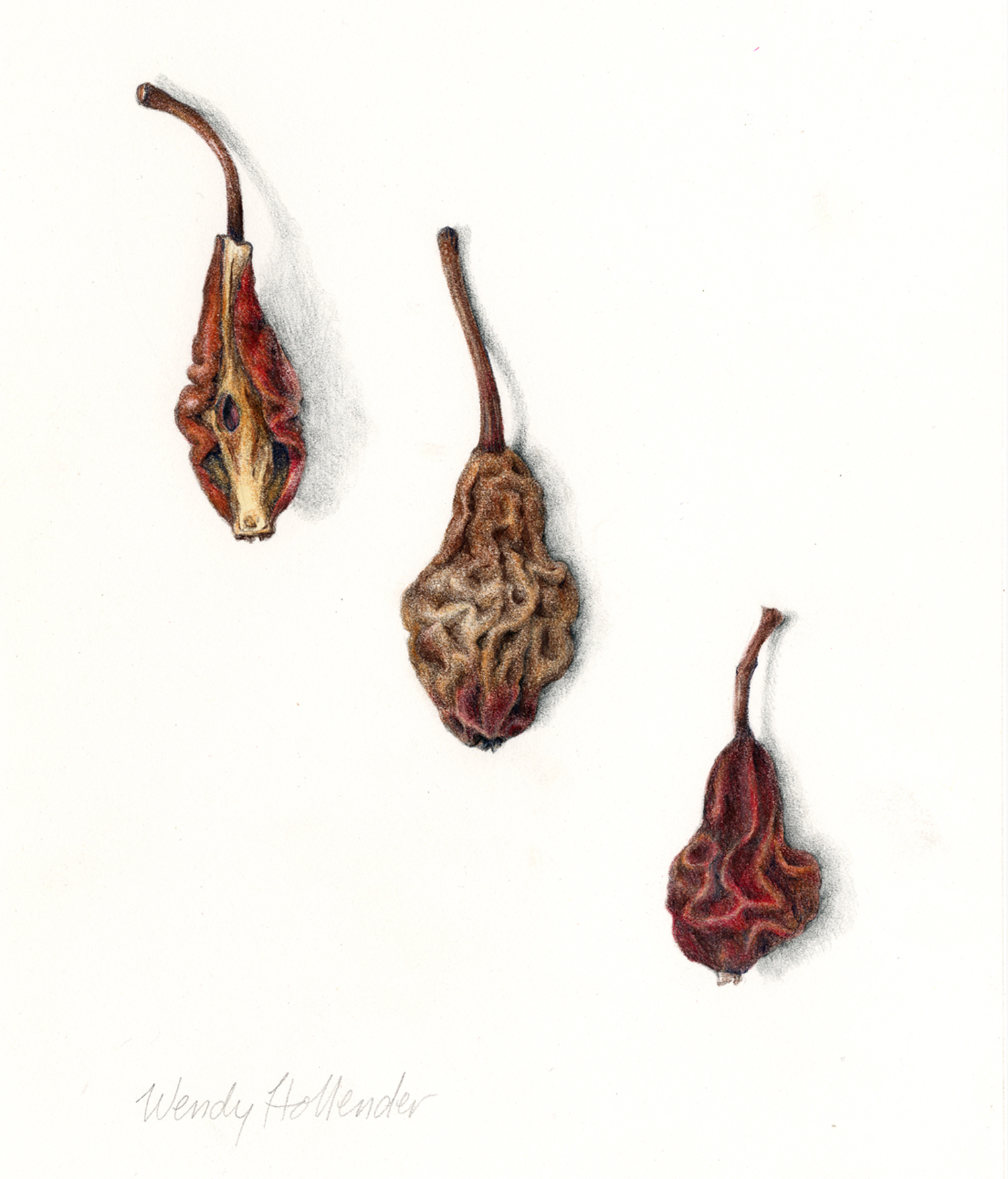 Pears, dried - Pyrus