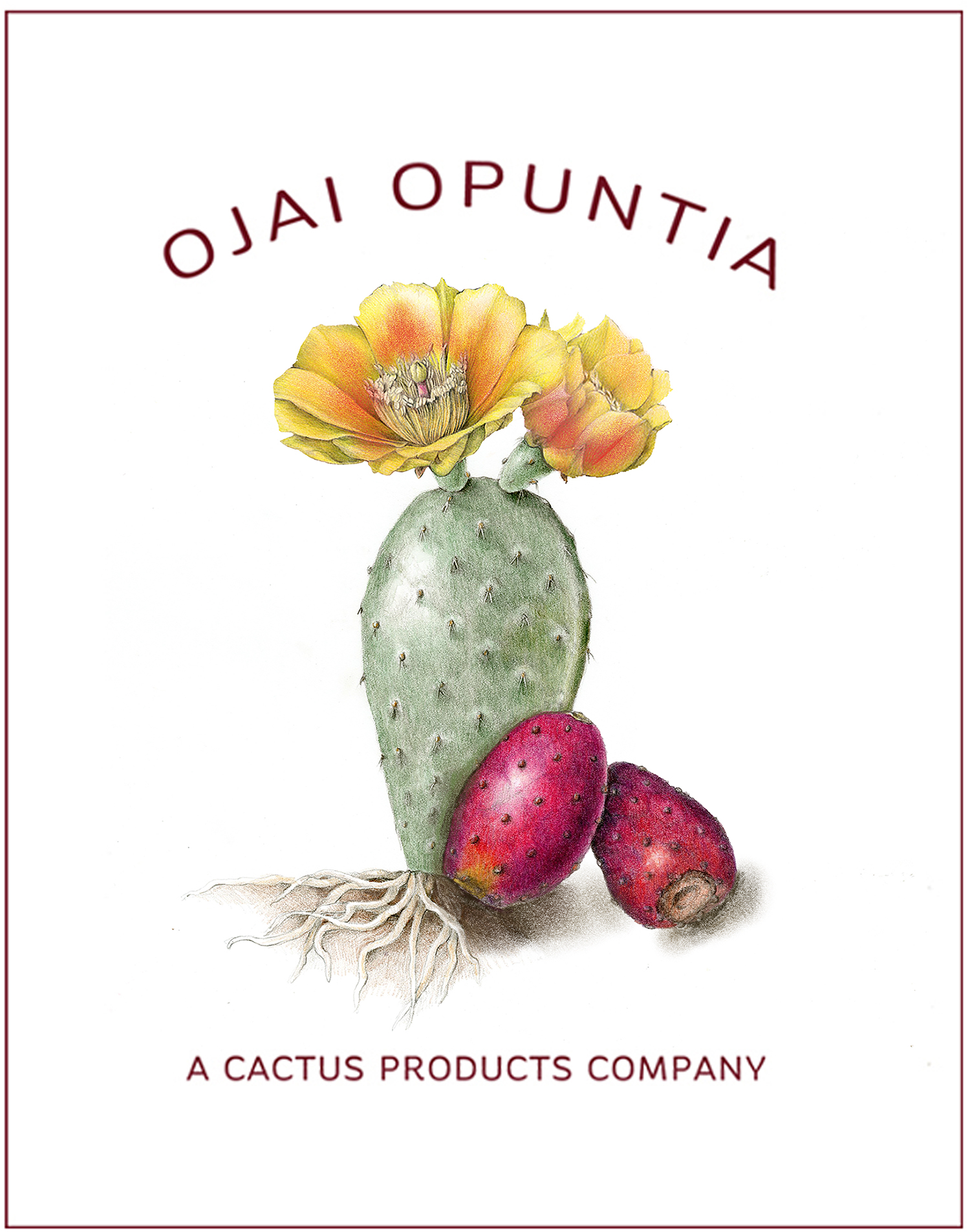 Logo for Ojai Opuntia