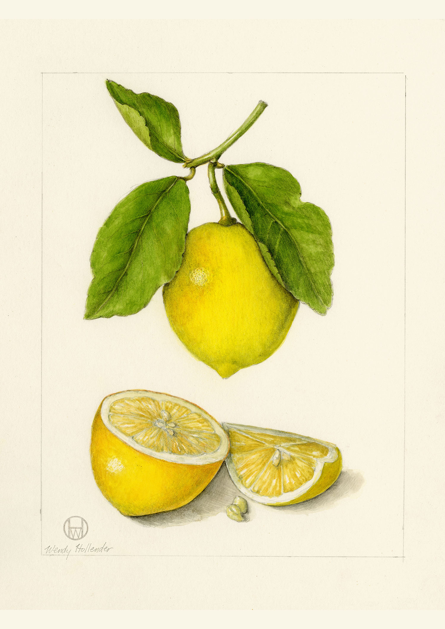 Meyer lemon - Citrus × meyeri
