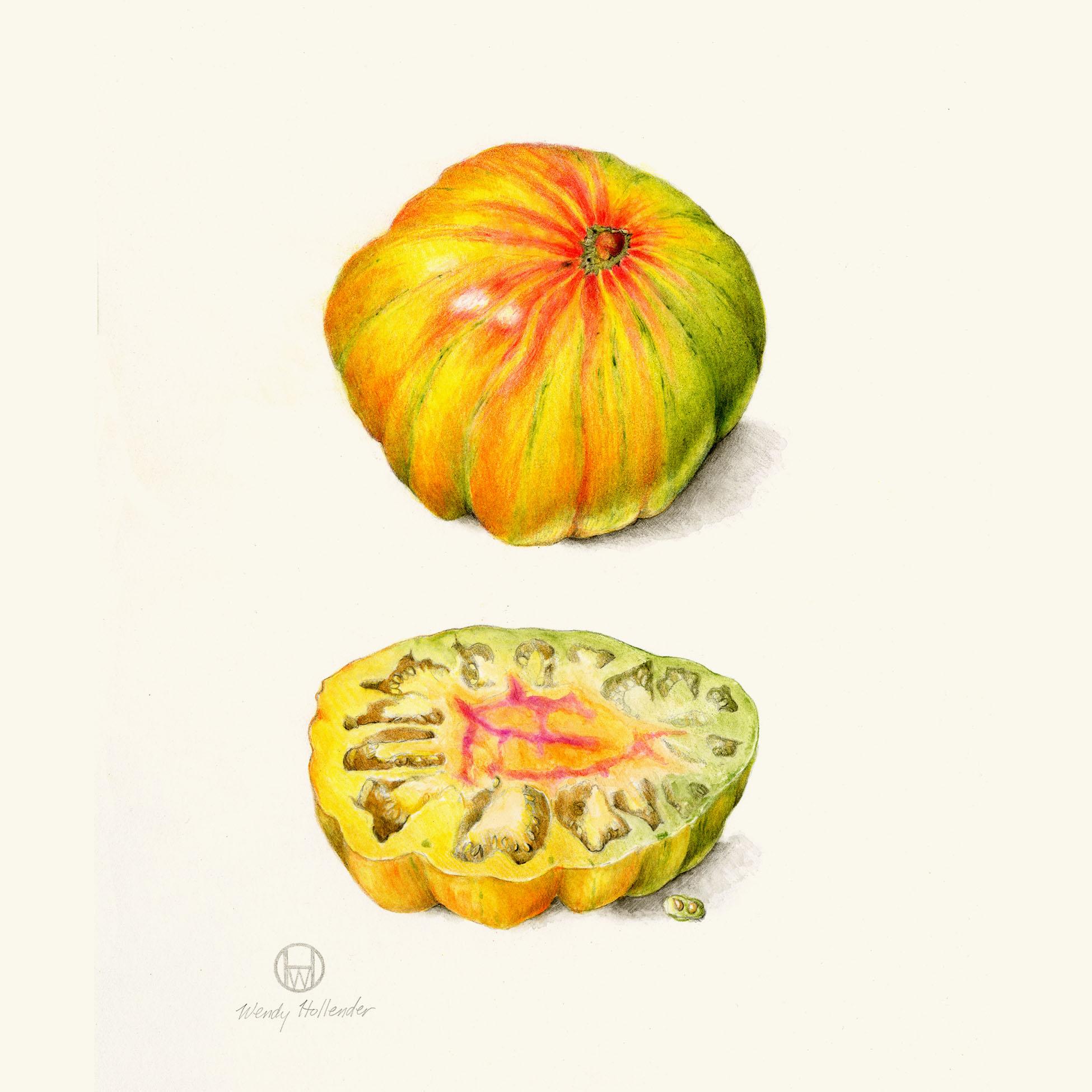 Copla tomato - Solanum lycopersicum