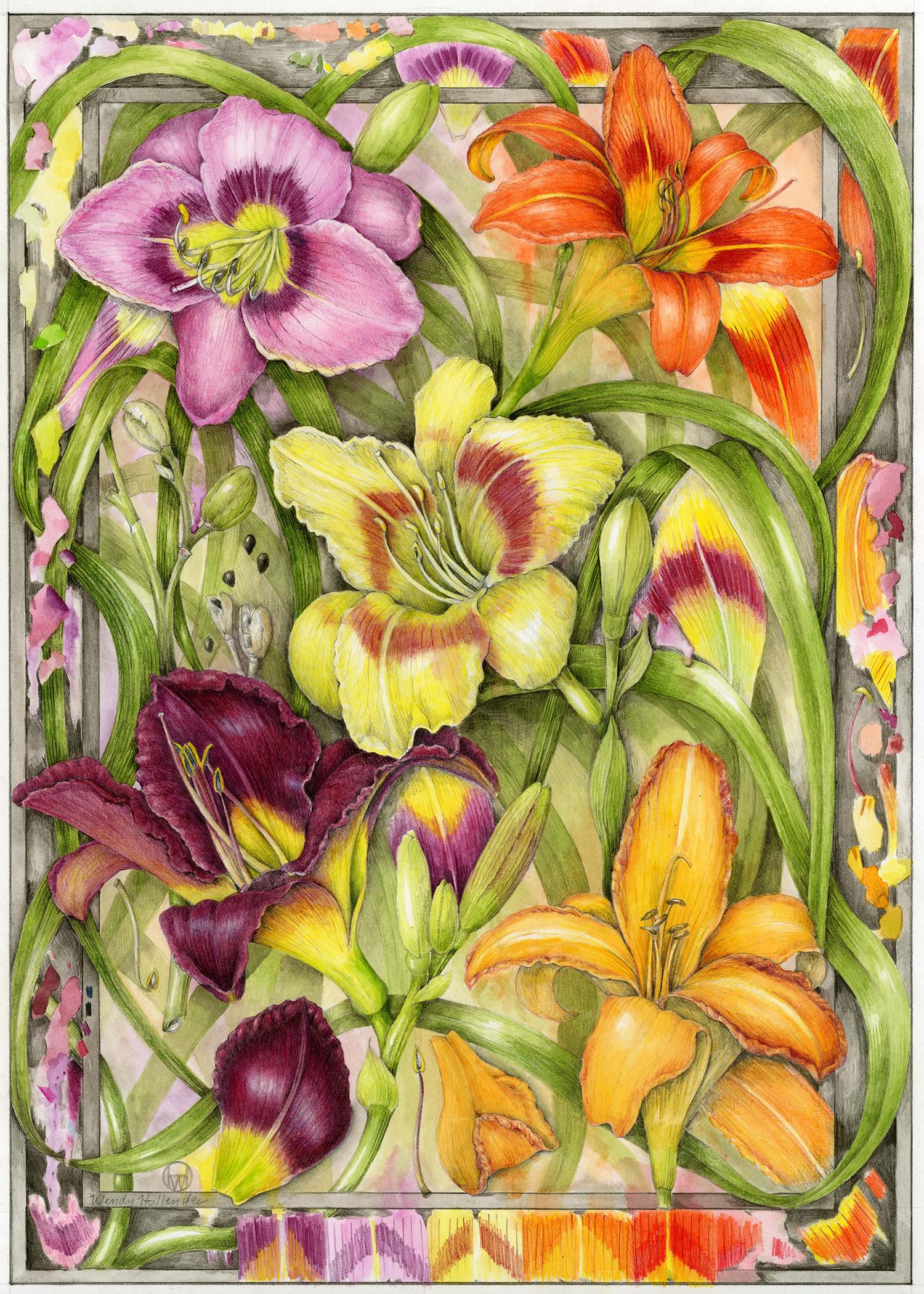Daylilies - Hemerocallis
