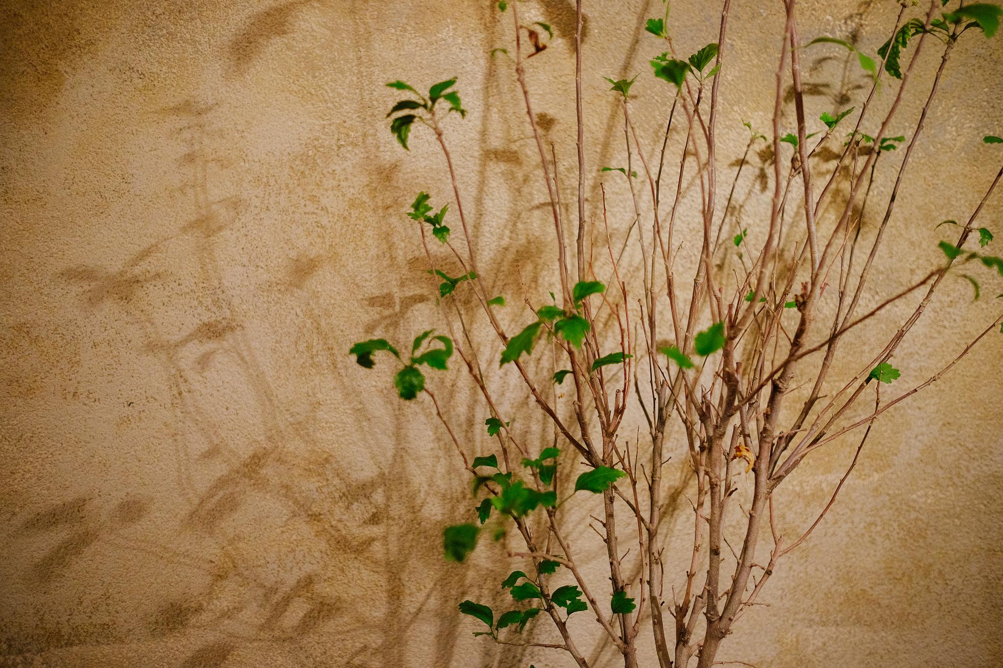 fado_plant.jpg