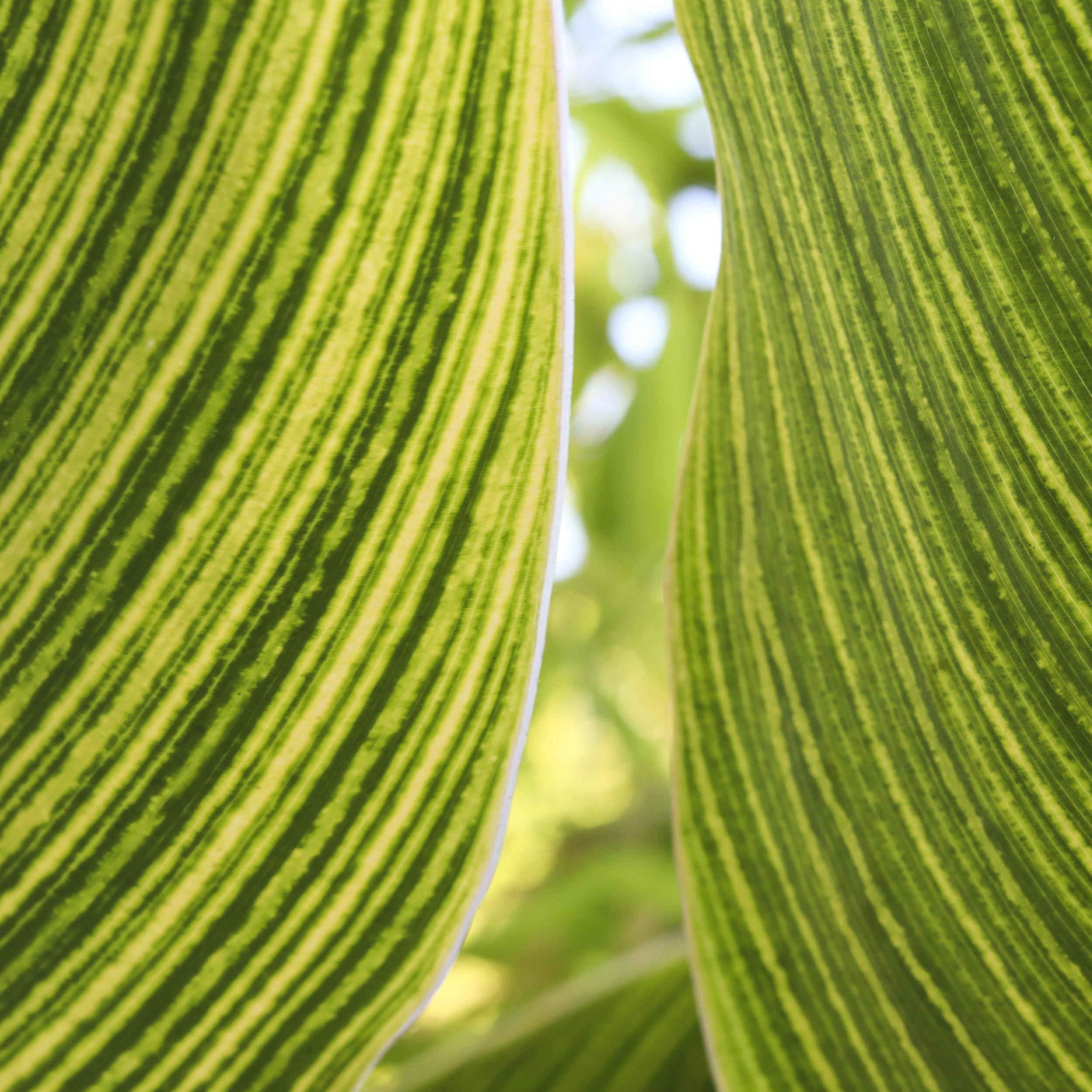 2 leaves.jpg