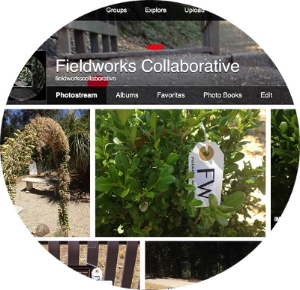 FLickrweb2.jpg