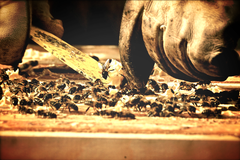 Hive tool and bees