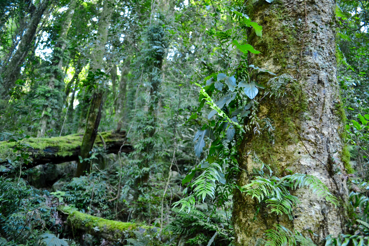 Lush rainforest Photo © Rebecca Boots