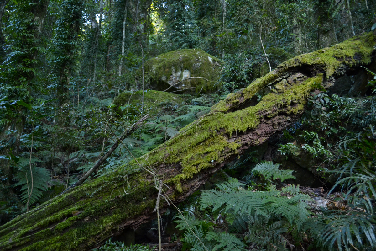 Mossy fallen tree  Photo © Rebecca Boots