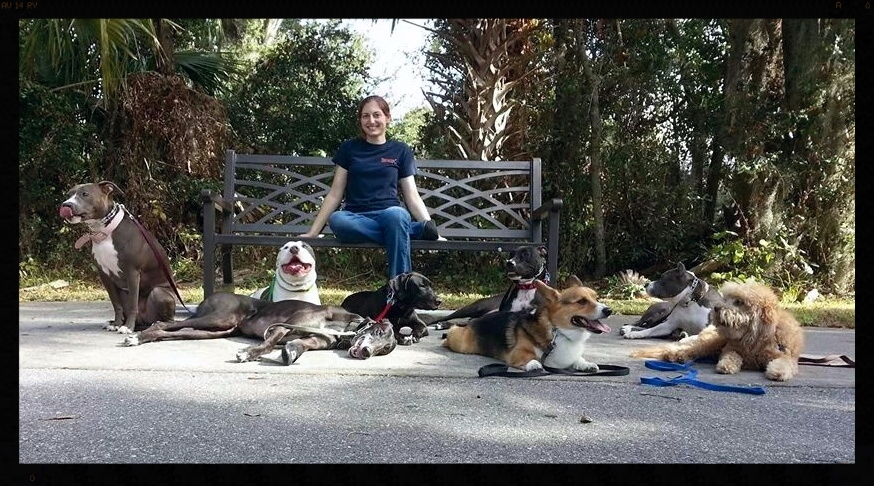 The red-haired girl and the dogs