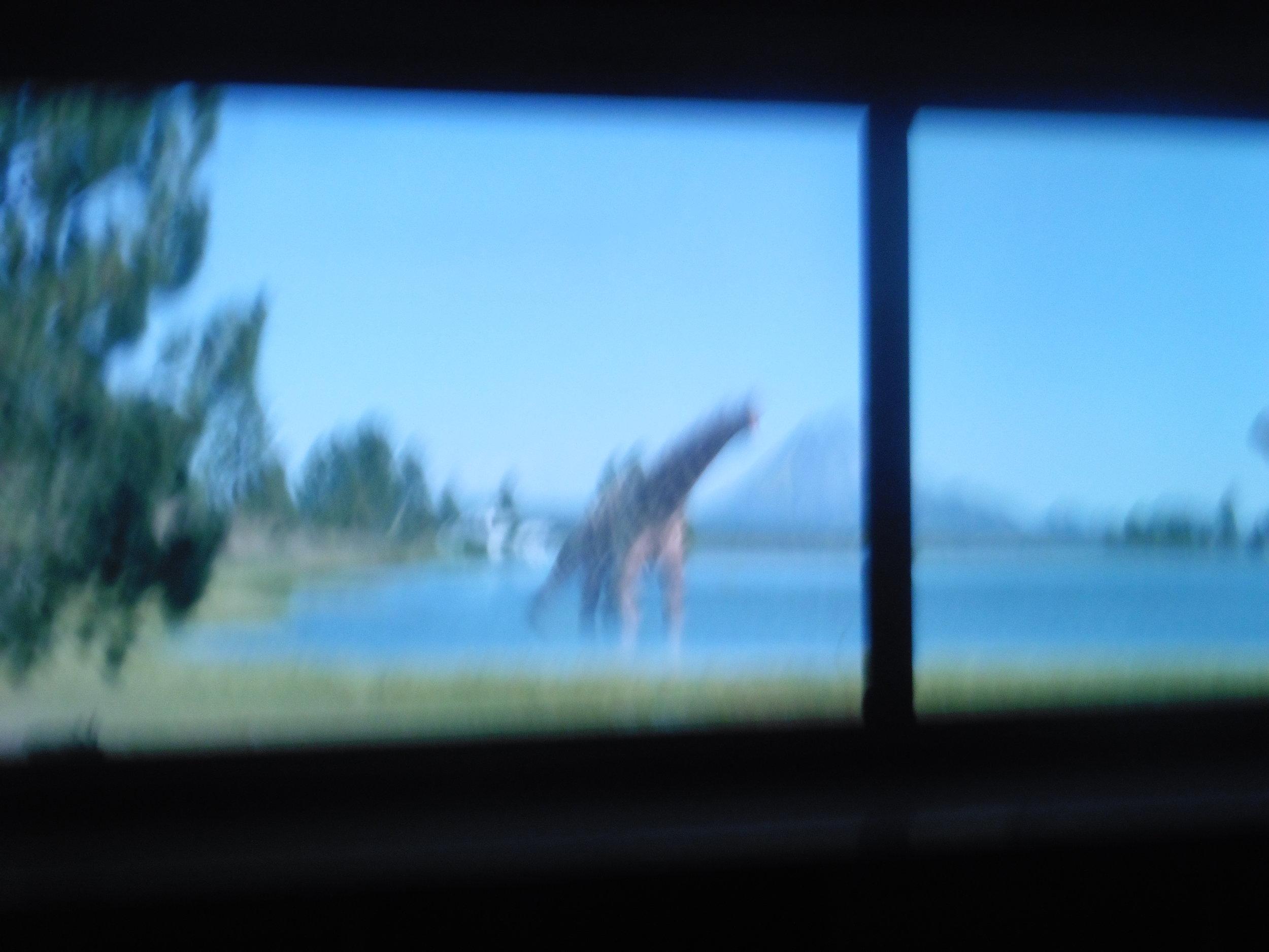 2018-06-01 12.00.02dinosaurs.jpg