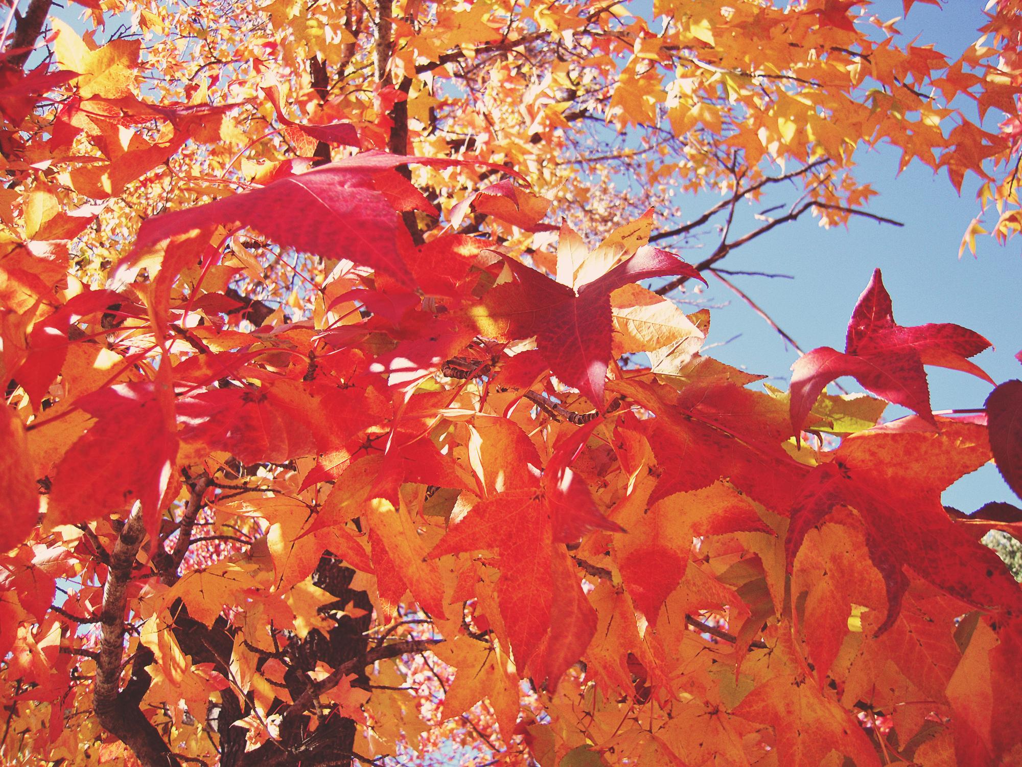 Autumn Leaves by Hillary Rain