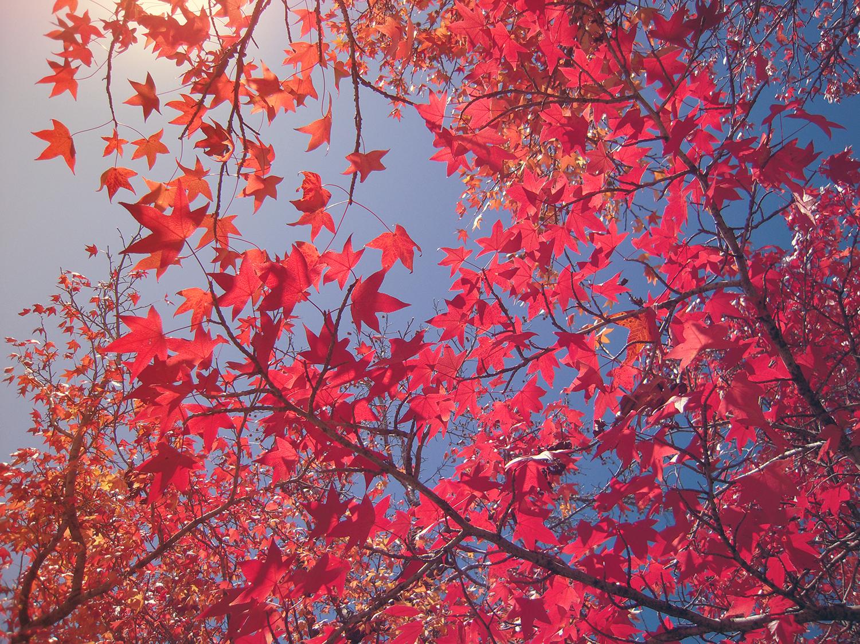 Autumn Is My New Year by Hillary Rain