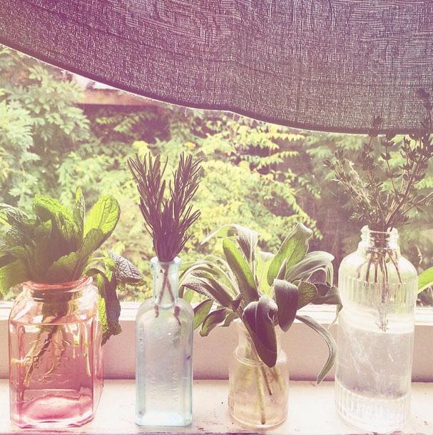 flowers in windowsill.jpg