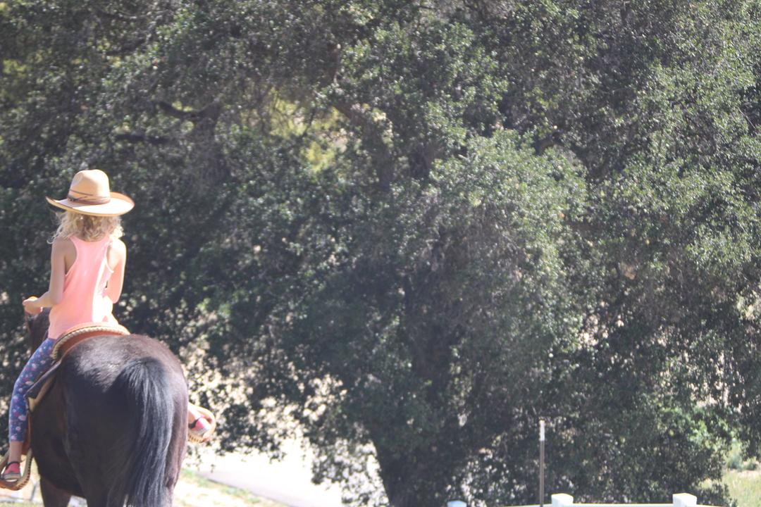 lily_horse.jpg