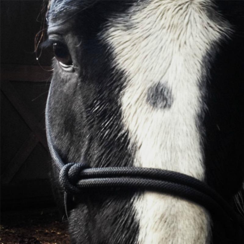 A Horse named Prayer.jpg