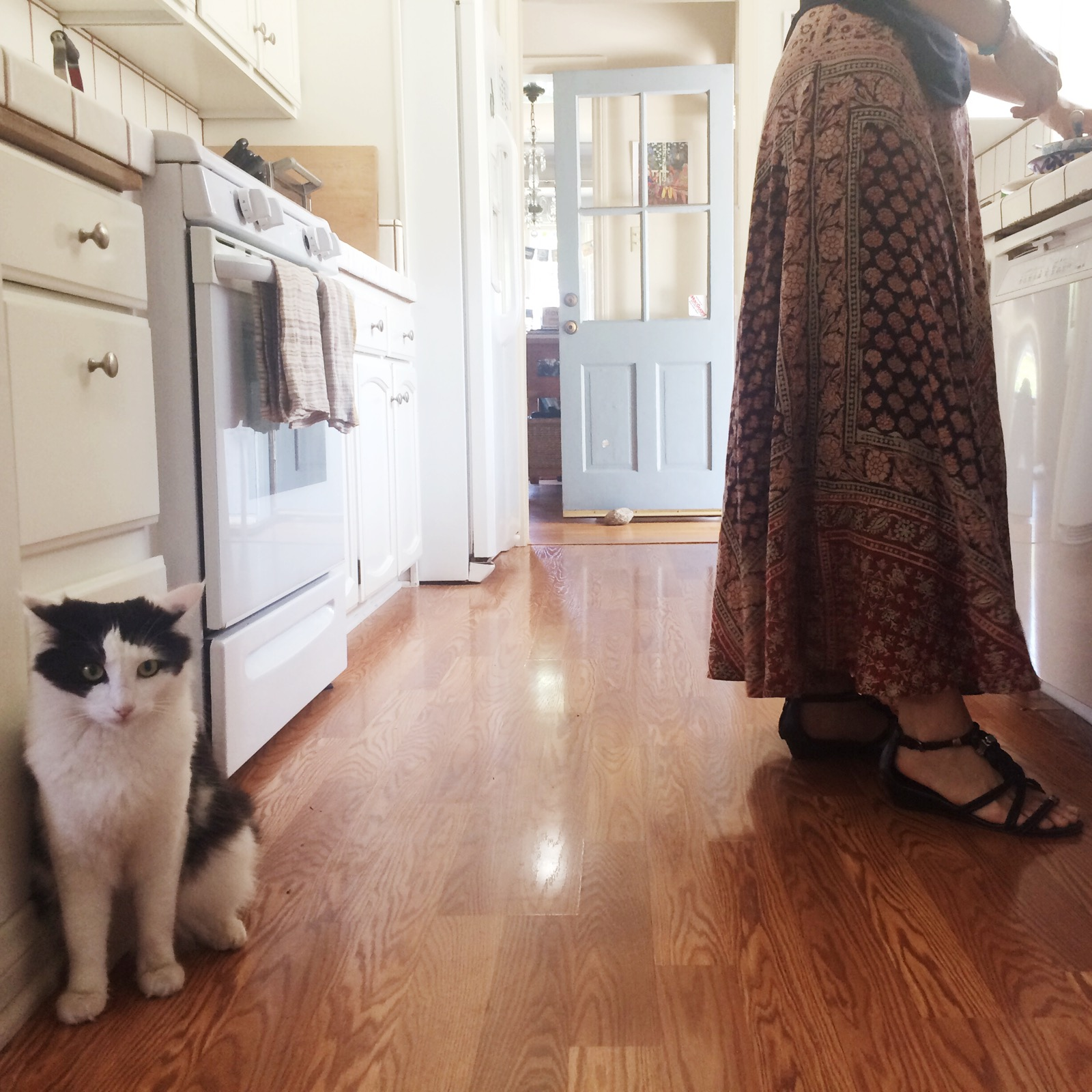 Carrie Anne and cat in the kitchen