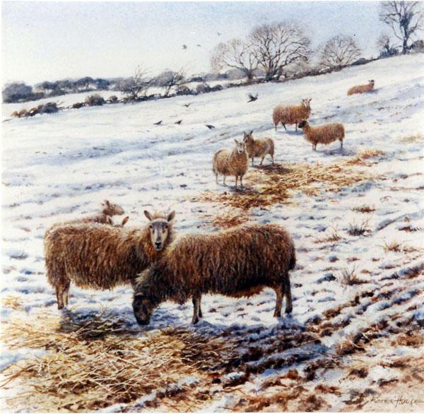 SheepSnow.jpg