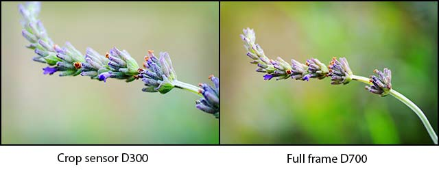 Comparison showing the same subject photographed from the same distance but one with a crop sensor and the other full frame. Both images uncropped. I like that crop sensor cameras make you feel like you're getting that bit closer. All other images on here taken with the D300 because I wanted maximum closeup straight out of camera as I prefer to get my composition as right as possible in camera and so I feel the crop-sensor D300 allows me to get that right for these types of images.
