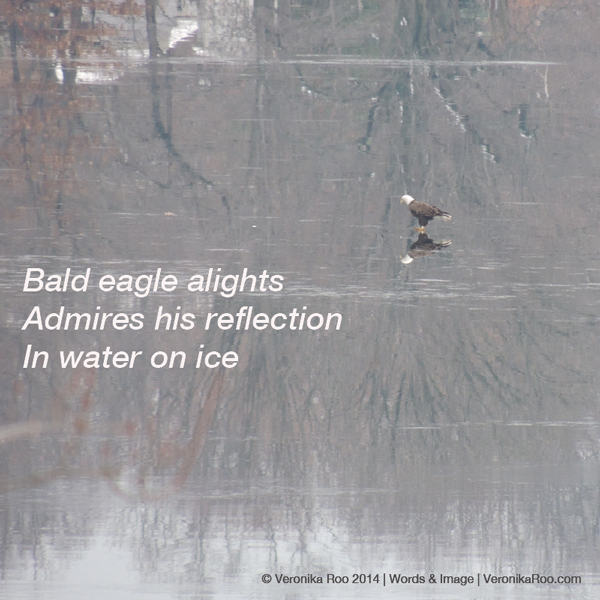 Eagle-Haiku-Veronika-Roo