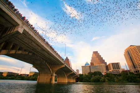 1. The bat colony - This is a must see, Austin has the largest urban bat colony in the world. 1.5 million bats emerge from under the Congress St Bridge every night. Its a continuous stream for about 45 minutes.