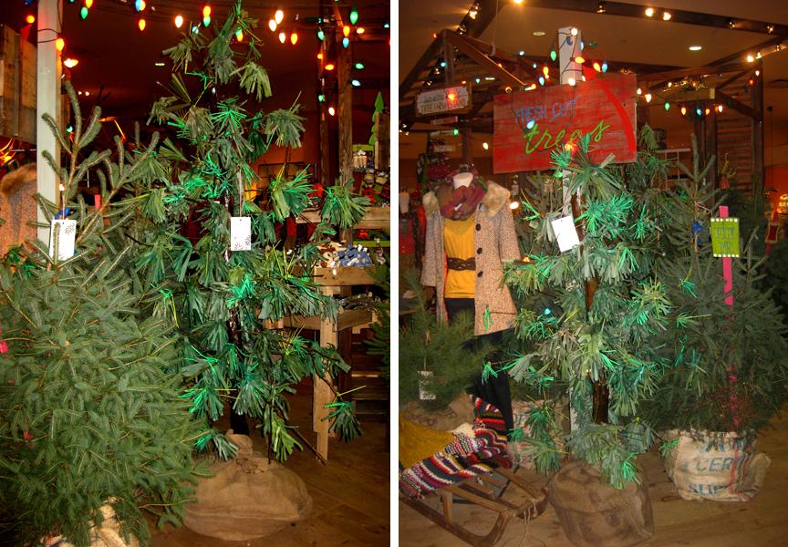 treefarm2.png