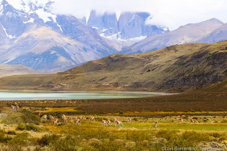 Patagonia, Torres del Paine, Chile