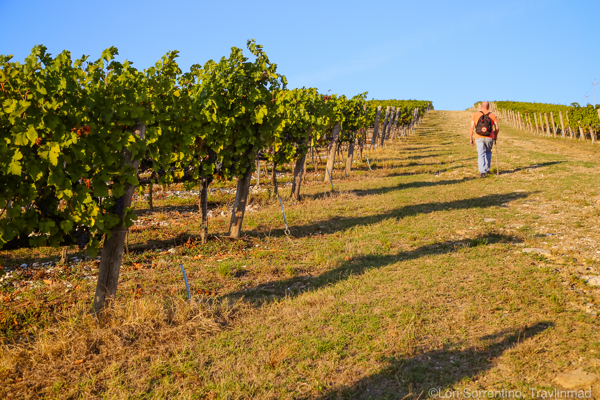 Vineyard hike, Chianti, Italy