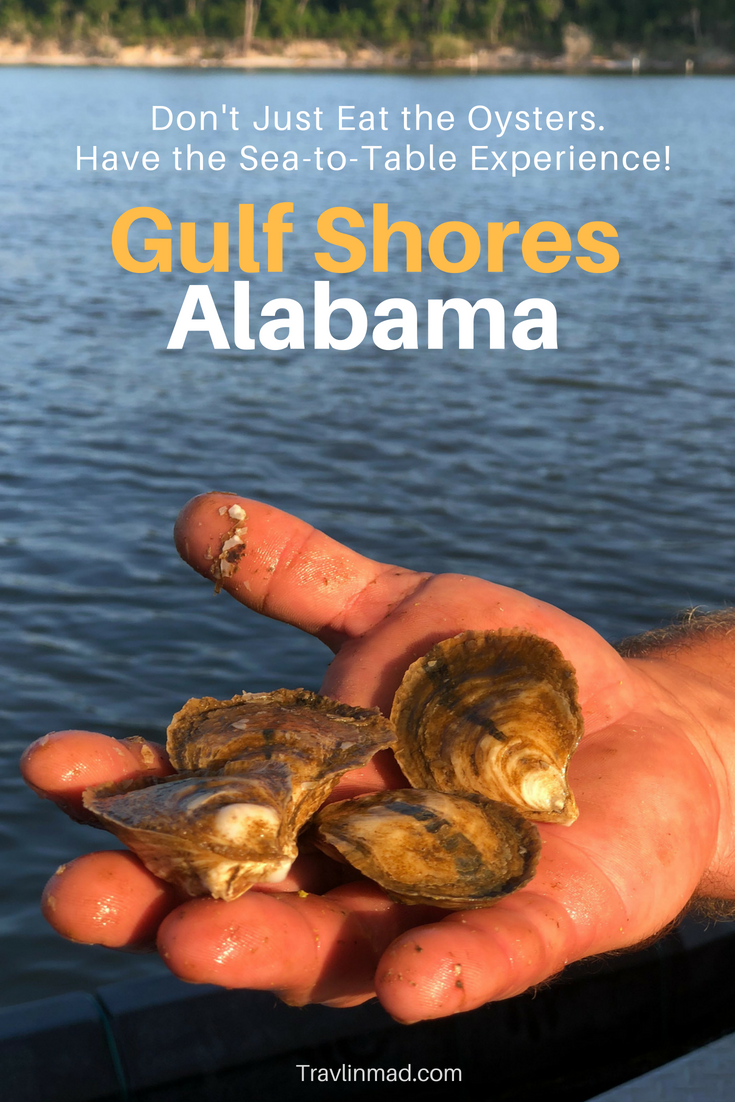 Foodies and fans of Gulf Coast oysters will love this unique sea-to-table experience farming and eating #freshoysters from Shellbank Selects in Bon Secour Bay. best oysters #GulfShores #Alabama