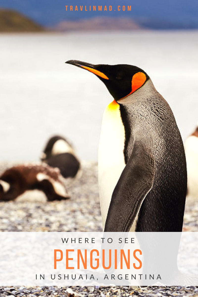 Where to See Penguins in Patagonia, Ushuaia, Argentina