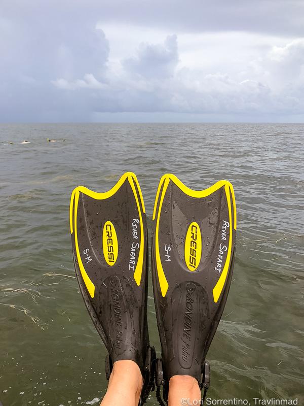 Snorkeling for Florida bay scallops