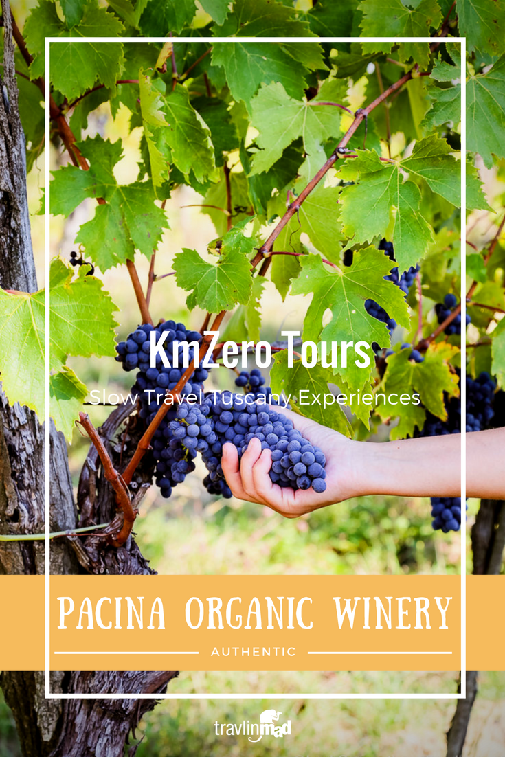 Pacina Winery of Chianti, producer of organic Chianti Colli Senesi wines.