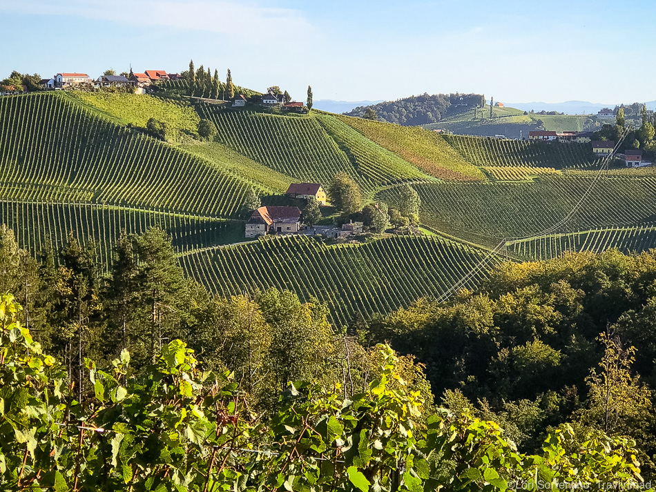 Vineyards, Südsteiermark, Austria
