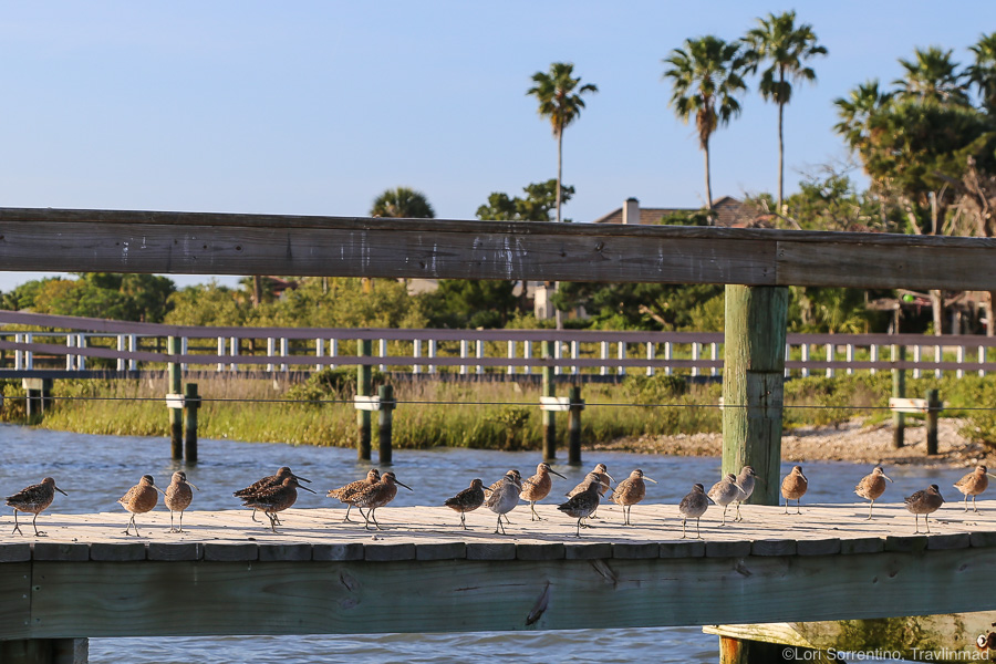 Birds on a dock on the Matanzas River