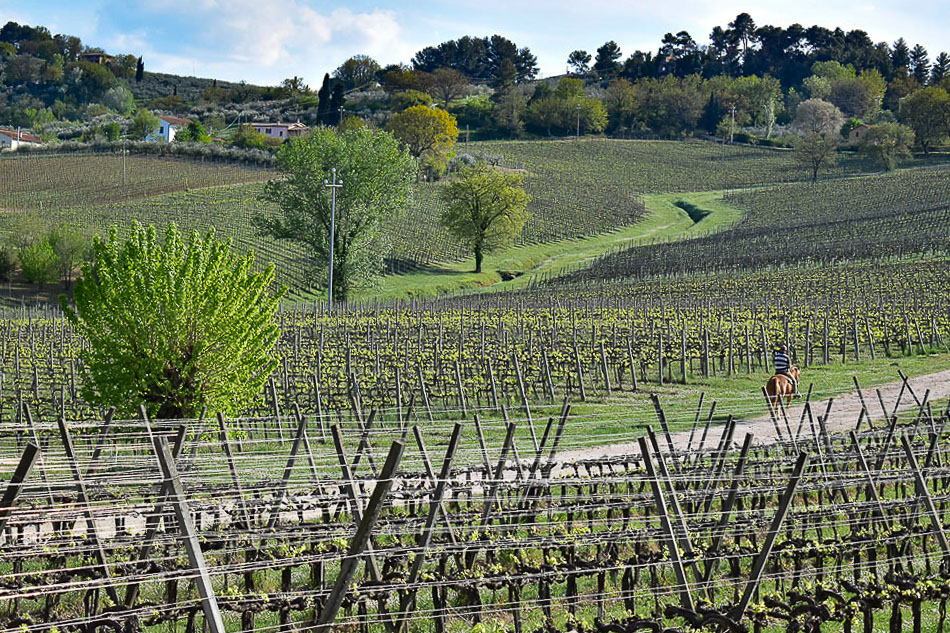 The lush vineyards of Umbria, Photo: Career Gappers
