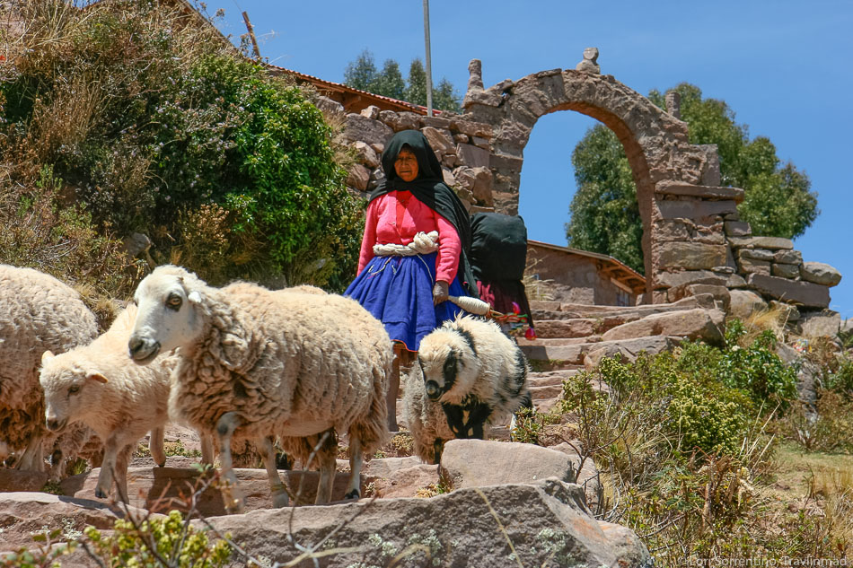 Tending sheep on Taquile Island, Lake Titicaca, Peru