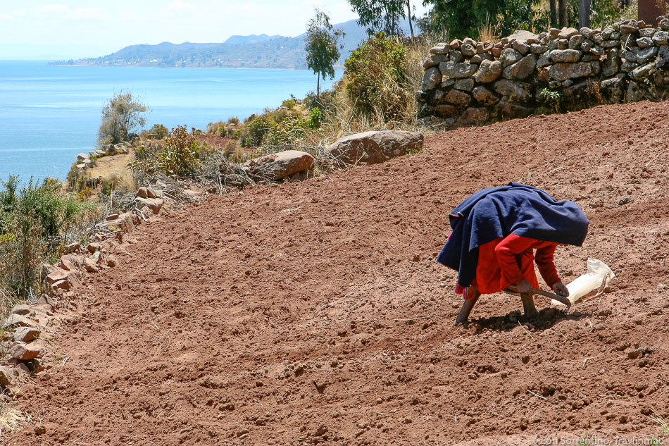 Farming by hand on Taquile Island, Lake Titicaca, Peru