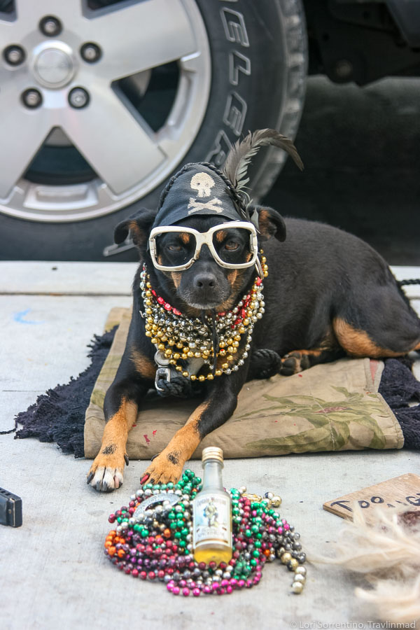 Pirate doggie had a ruff night!