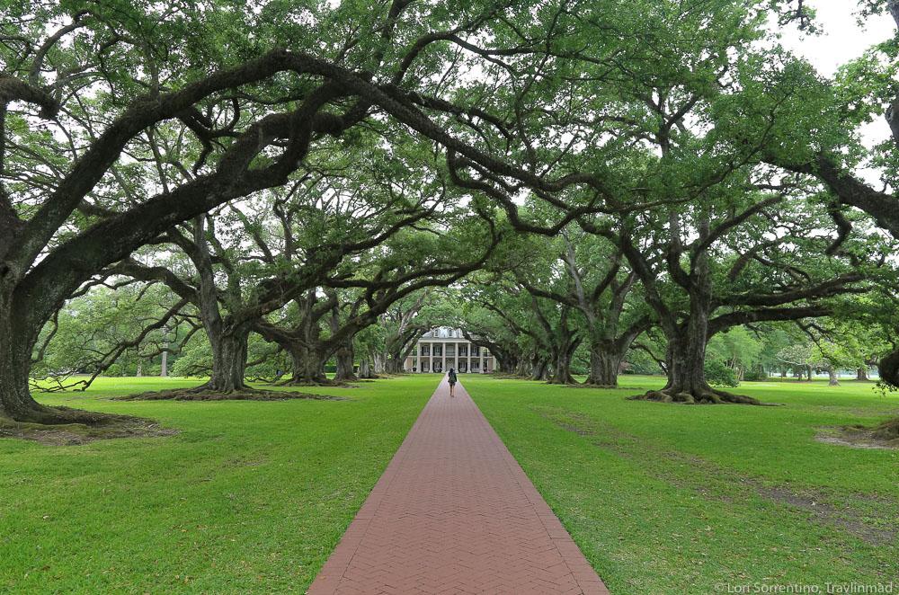 Live oak trees, Oak Alley Plantation, Louisiana