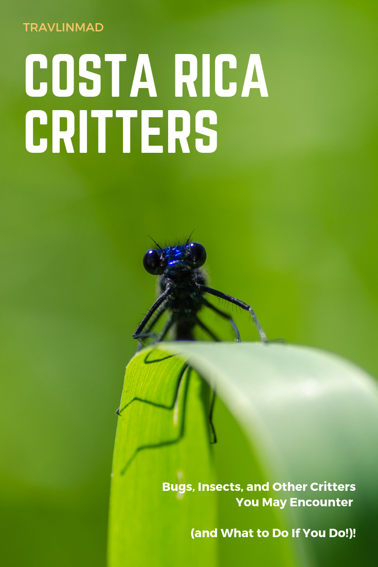 Costa Rica bugs, insects, and creepy critters you might encounter on your visit, and what to do if you do!