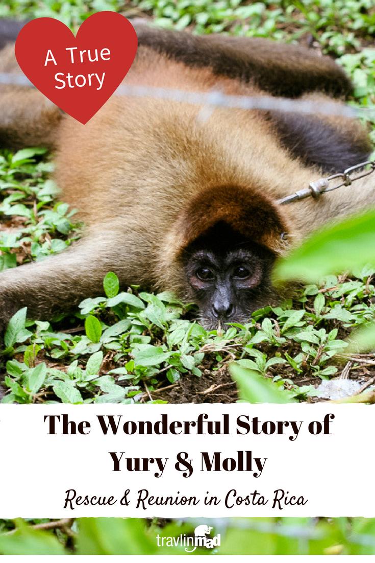 Monkey Rescue and Reunion Costa Rica