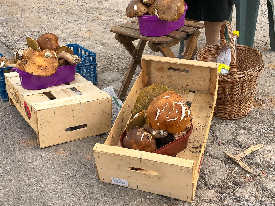 Wild mushrooms for sale in Slovenia