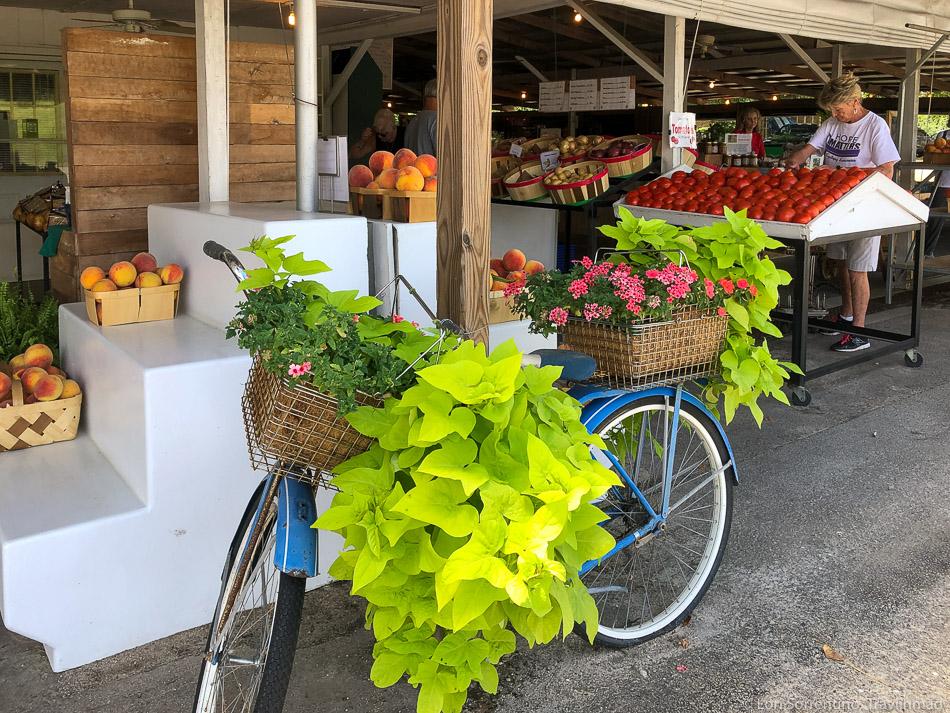 Bike and potato vine, Edgefield, SC