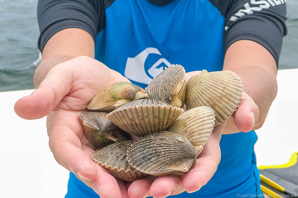 Sea-to-Table Scalloping: Step 1 - Dive for your dinner!