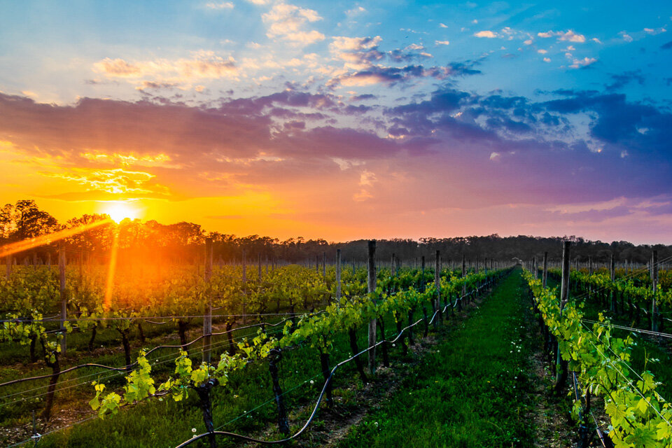 Did you know the North Fork of Long Island is known for their wine?