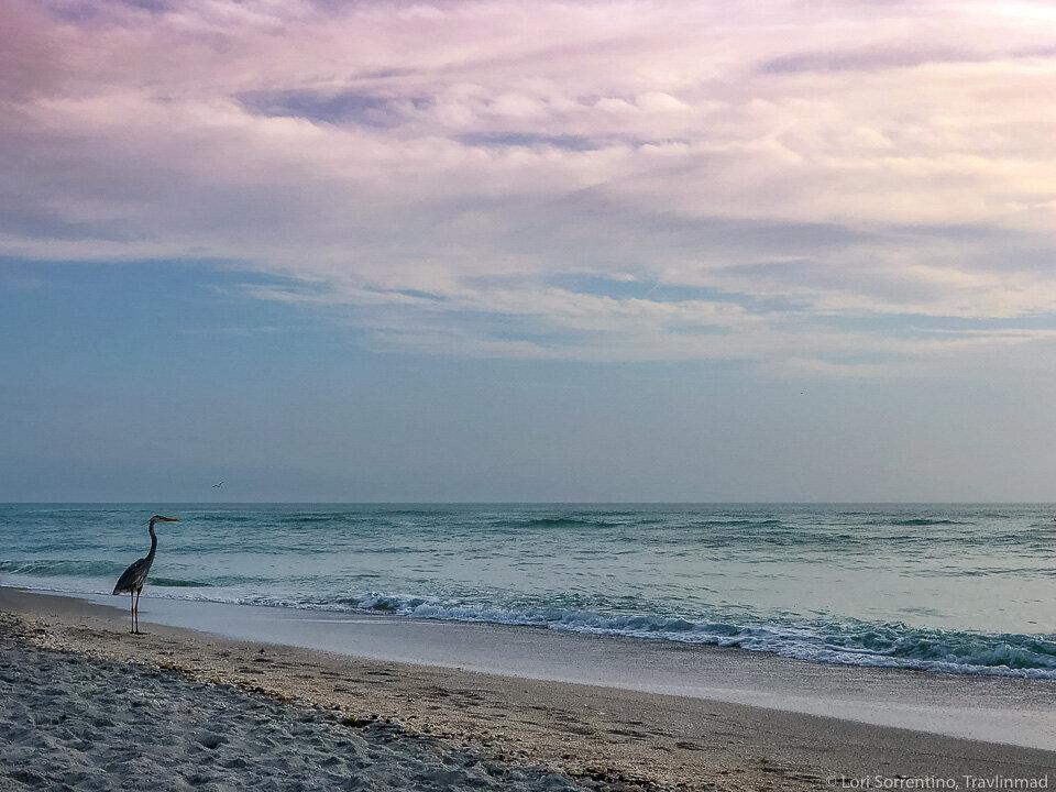 Meet the locals on Sanibel Island, florida