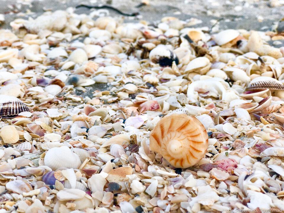 Mounds of shells wash on the beaches on Sanibel